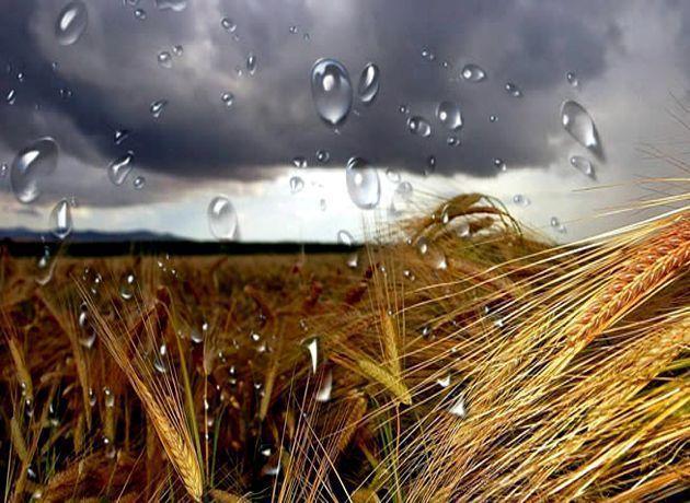MONSANTO Y BAYER, HASTA EN LA LLUVIA: A NIVELES QUE ROMPEN MARCAS MUNDIALES, DETECTAN AGROTÓXICOS EN PRECIPITACIONES DE ARGENTINA